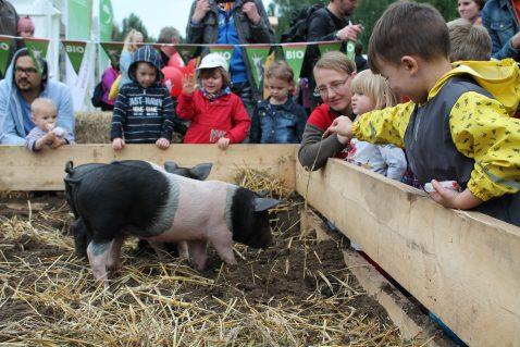Schweine_Kinder